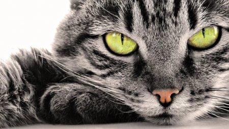 На лечение кота от бонстика Юлия потратила 1000 рублей